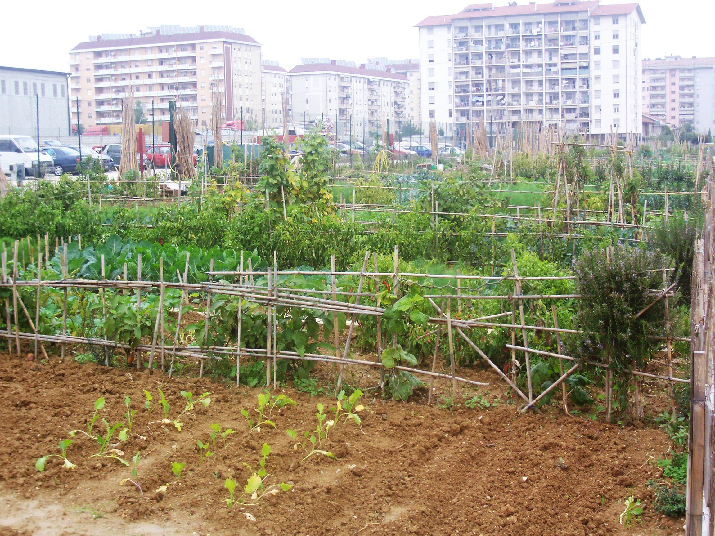 Orti urbani a Pescara