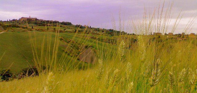 agricoltura maltempo